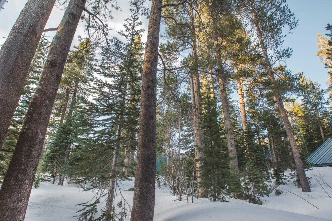 DSR_Sunnyside_back-trees_web